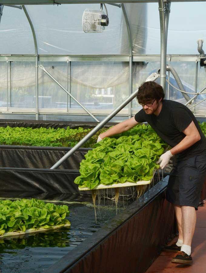 مزارع کشاورزی آینده